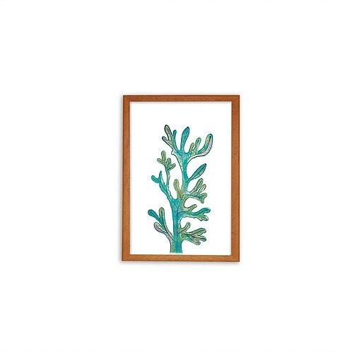 Magical Seaweed print - Wood frame - Mary Tale